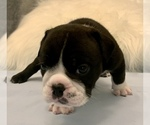 Small #19 Bulldog