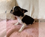 Image preview for Ad Listing. Nickname: Zoey