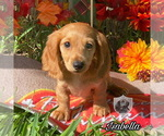 Image preview for Ad Listing. Nickname: Isabella