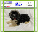 Image preview for Ad Listing. Nickname: Max