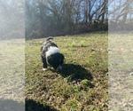 Small #9 Portuguese Water Dog