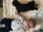 Labrador Retriever Puppy For Sale in WEATHERFORD, TX