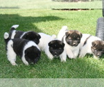 Image preview for Ad Listing. Nickname: Litter of 7