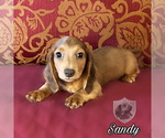 Image preview for Ad Listing. Nickname: Sandy