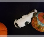 Small #22 Basset Hound
