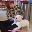 Small Photo #135 Dogo Argentino Puppy For Sale in PINEVILLE, MO, USA