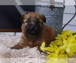 Small #5 Soft Coated Wheaten Terrier
