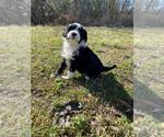 Small #10 Portuguese Water Dog