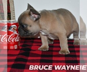 French Bulldog Puppy for sale in GRAHAM, WA, USA