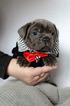 Handsome Puppy Thor