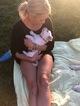 English Cream Golden Retriever  Puppy For Sale in MODESTO, CA, USA