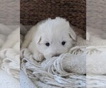 Small #42 Great Pyrenees