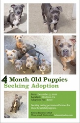 American Pit Bull Terrier Puppy For Sale in STOCKTON, CA