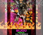 Image preview for Ad Listing. Nickname: BIJOU