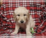 Image preview for Ad Listing. Nickname: Willow