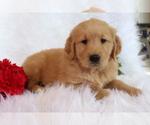 Image preview for Ad Listing. Nickname: Barky