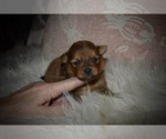 Image preview for Ad Listing. Nickname: Bella Rose