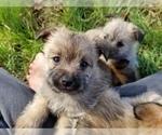 Puppy 4 Pom-A-Nauze