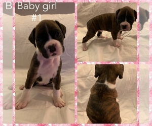 Boxer Puppy for sale in W LINN, OR, USA