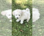 Small #3 Poochon