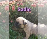 Image preview for Ad Listing. Nickname: Sadie