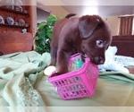 Small #1 Labrador Retriever