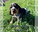 Puppy 5 Bluetick Coonhound
