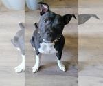 Small #3 Staffordshire Bull Terrier