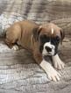 Small #8 Boxer