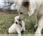Small #61 German Shepherd Dog