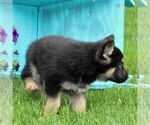 Small #2 German Shepherd Dog