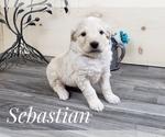 Image preview for Ad Listing. Nickname: Sabastian