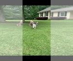 Small #2 Bulldog