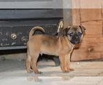 Puppy 3 Jug