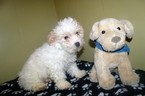 Cantel Puppy For Sale in PATERSON, NJ, USA