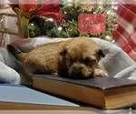 Puppy 4 Poo-Shi