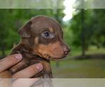 Small #3 Doberman Pinscher