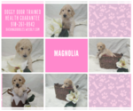 Image preview for Ad Listing. Nickname: Magnolia