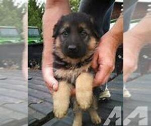 German Shepherd Dog Puppy for sale in KOKOMO, IN, USA