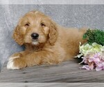 Image preview for Ad Listing. Nickname: Brody