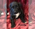 Small #1 Portuguese Water Dog