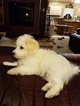 Handsome and charming AKC registered little boy