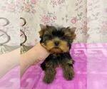 Small #20 Yorkshire Terrier