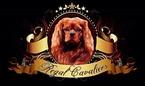 Small #2 Cavalier King Charles Spaniel