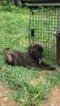 Boxer-Collie Mix Dog For Adoption in ELKRIDGE, MD, USA