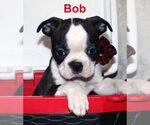 Image preview for Ad Listing. Nickname: Bob