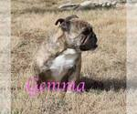 Image preview for Ad Listing. Nickname: Gemma