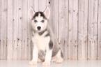 Blazer Male Husky
