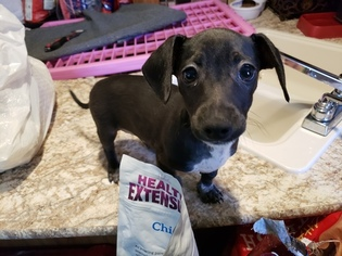 Dachshund-Unknown Mix Dogs for adoption in TYLER, TX, USA