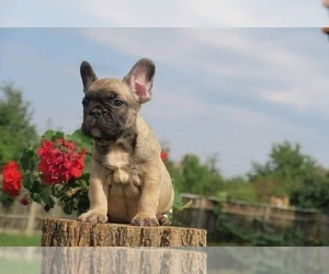 Puppies For Sale Near East Brunswick New Jersey Usa Page 1 10